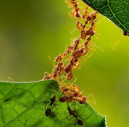 pest-control-ants-on-leaf-owl-pest-control-dublin