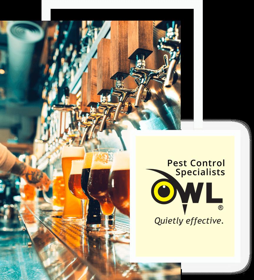 pest-control-bars-pubs-Owl Pest control Dublin