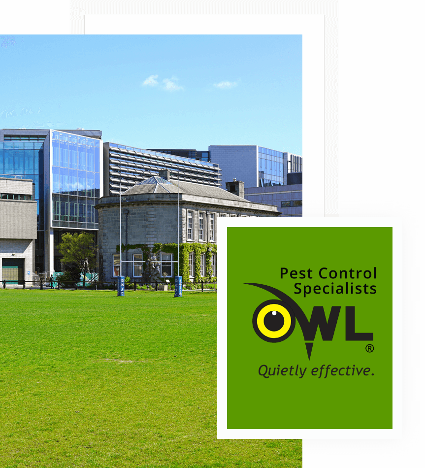 pest-control-services-for-universities-Owl Pest Control Dublin