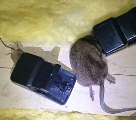 Heavy Duty Plastic Rat trap