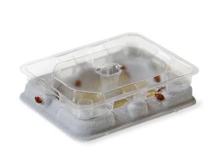 bedbug-slider-monitor-detector-Owl pest Control Ireland