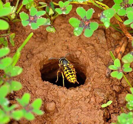 pest-control-wasps-nest-underground-Owl pest control Dublin