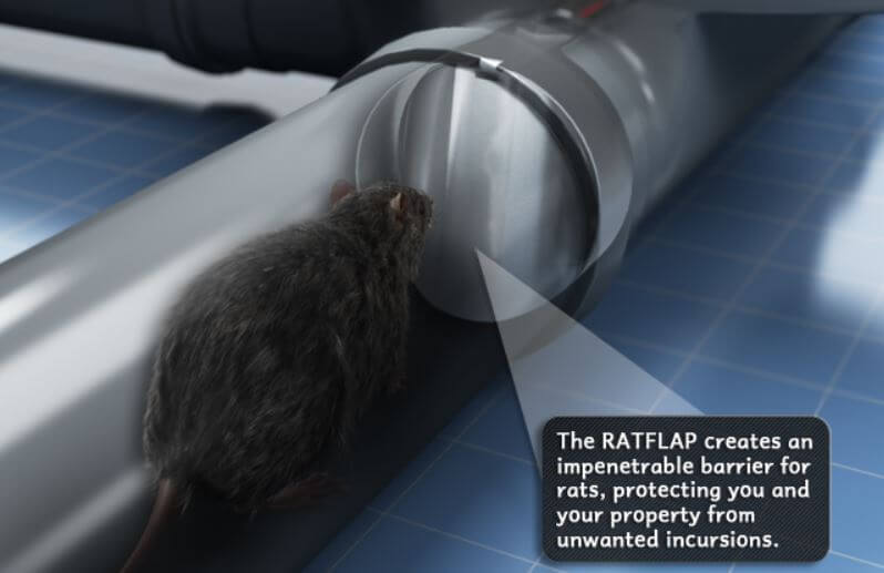 Rat Flap - Owl pest control Dublin