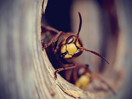 wasp-nest-removal-Owl Pest Control Dublin
