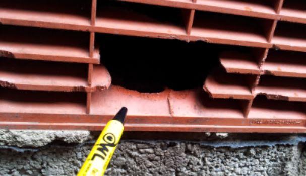 Rat mice access through gnawed air vent - Owl pest control Dublin