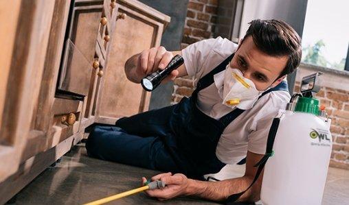 owl-pest-control-dublin-specialist-inspection-spraying