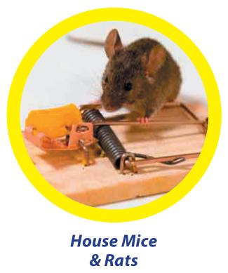 house-mice-&-rats - Owl Pest Control Dublin