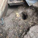 Rat burrow in patio - Owl pest control Dublin