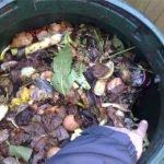 Rat burrow inside compost bin - Owl pest control Dublin