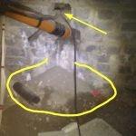 Rat burrowing through building foundations - Owl pest control Dublin