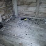 Rat infestation and droppings in a garden shed - Owl pest control Dublin