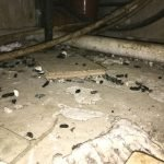 Rat infestation and droppings under kitchen units - Owl pest control Dublin