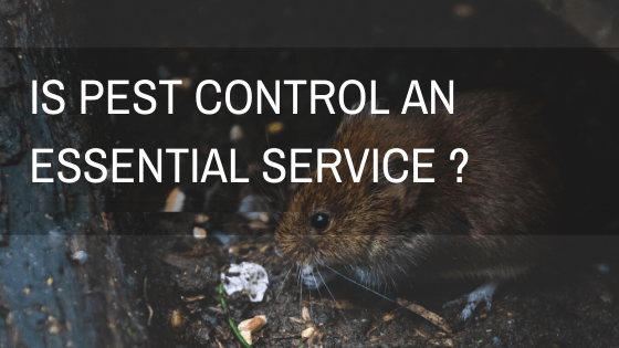 Is Pest Control an Essential Service in Ireland-Owl pest control Dublin